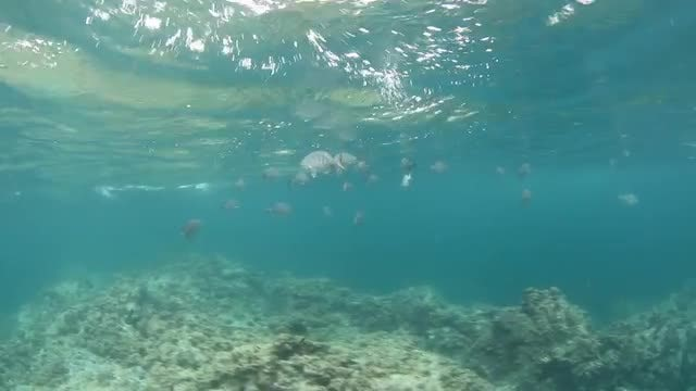 School Of Fish In Shallow Water: Stock Video