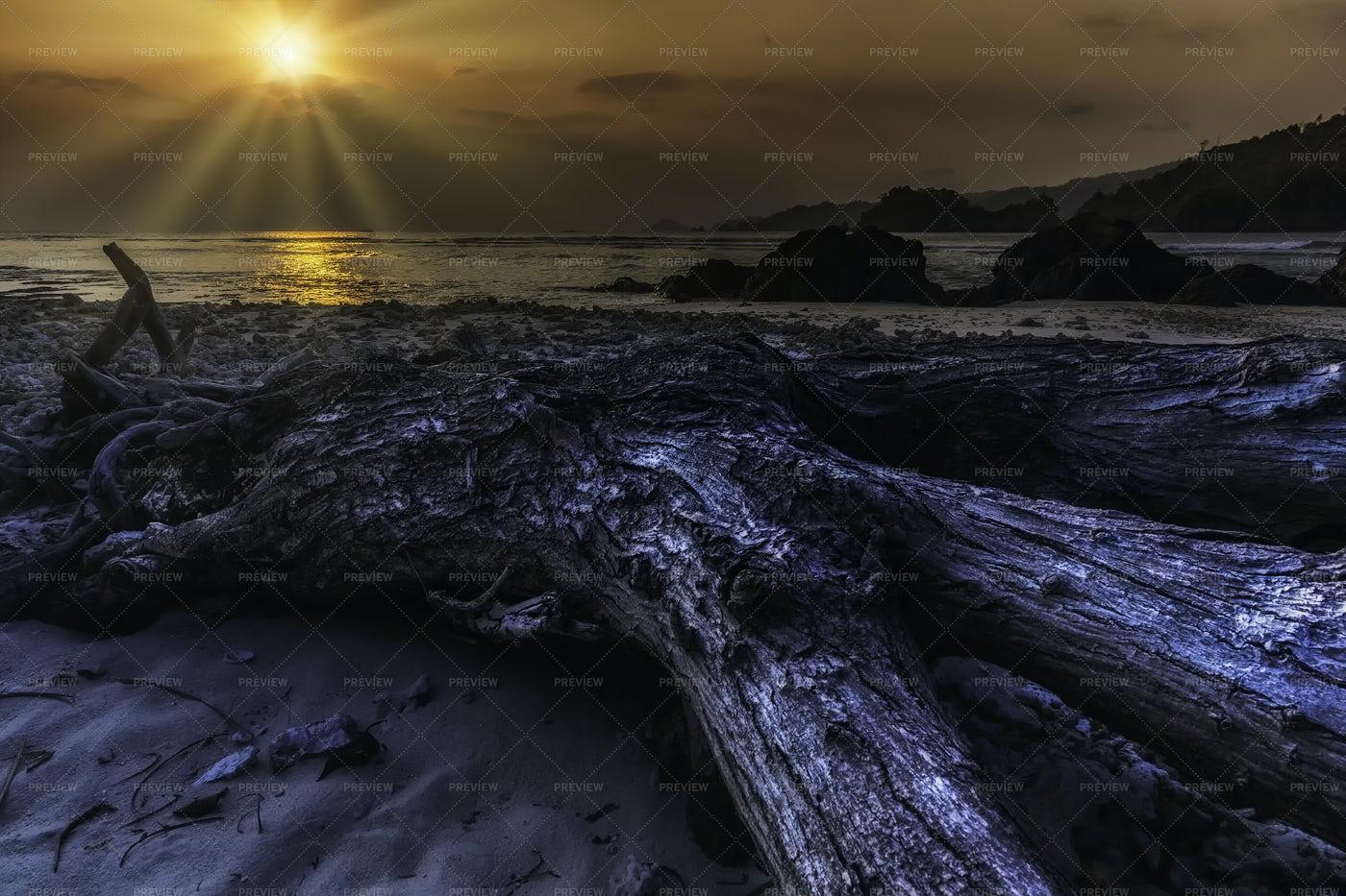 Teluk Kiluan Coconut Island: Stock Photos