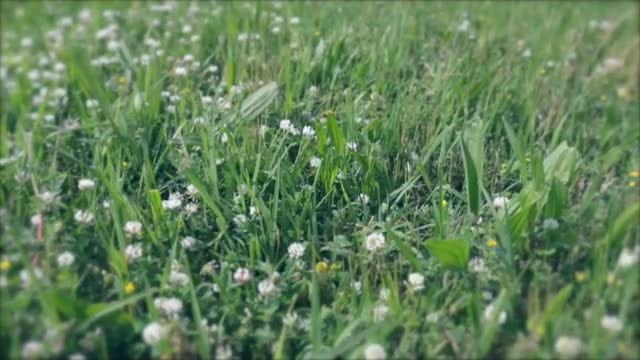 Meadow With Flowery Grass: Stock Video