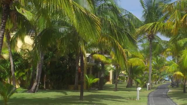 Park In Mauritius Island: Stock Video