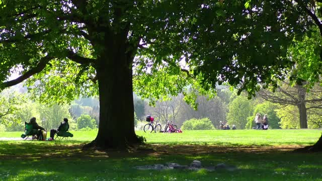 People Relaxing In The Park : Stock Video