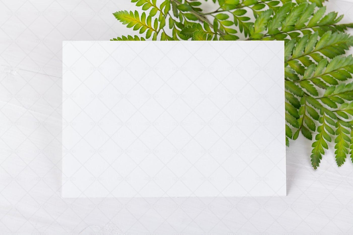 Greenery Empty Card: Stock Photos