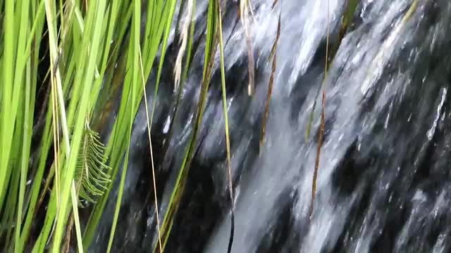 Waterfall And Hanging Plant: Stock Video