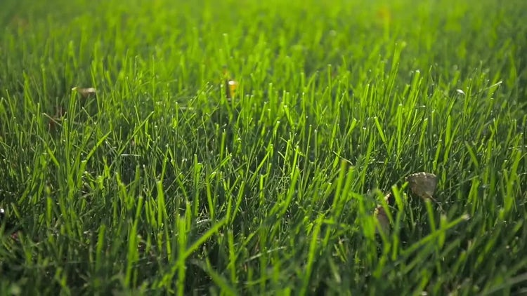 Close Up Shot Of Green Grass : Stock Video