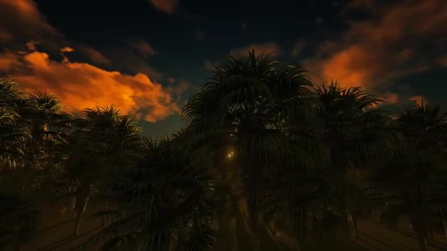 Sun And Jungle: Stock Motion Graphics