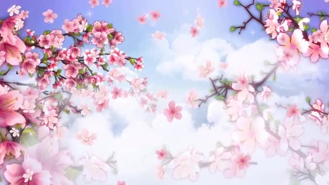Peach Flower Blossoming: Stock Motion Graphics