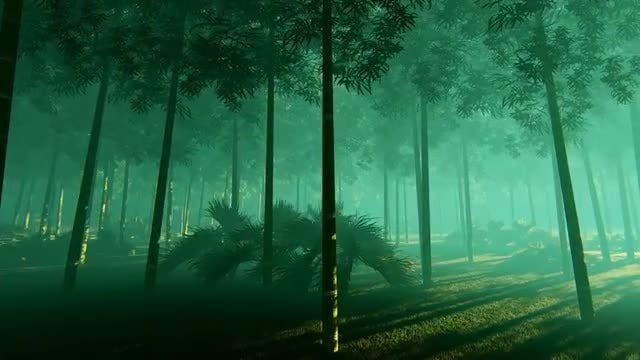 Bamboo Forest In The Fog : Stock Motion Graphics