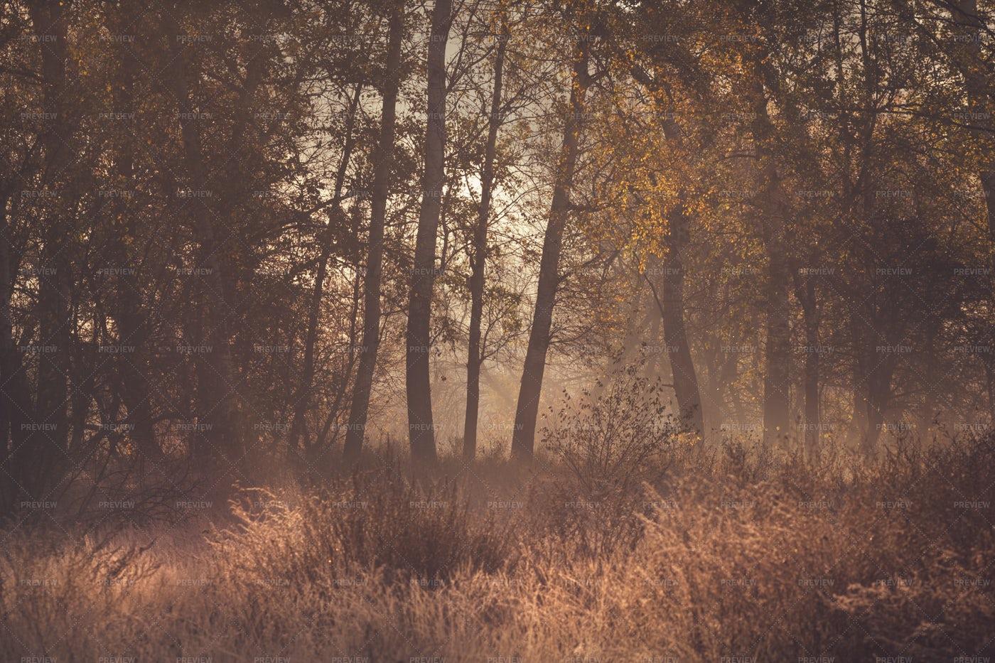 Morning Mist Nature: Stock Photos