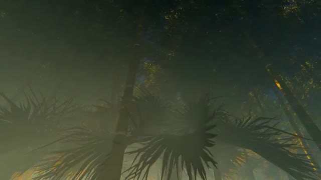 Bamboo Trees And Foggy Sunset: Stock Motion Graphics