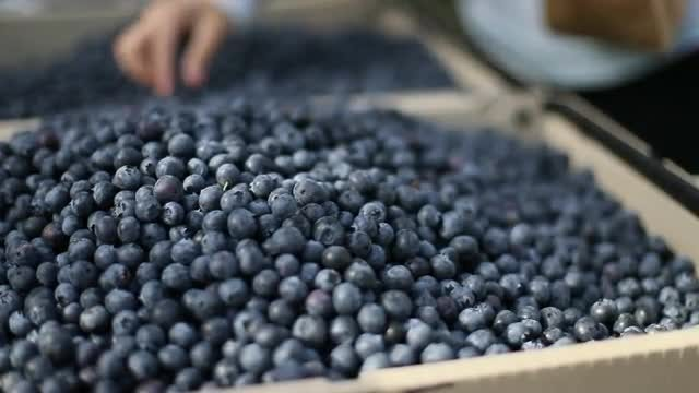 Farmers Market Blueberries: Stock Video