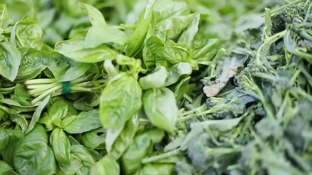 Pile Of Fresh Green Basil Leaves: Stock Video
