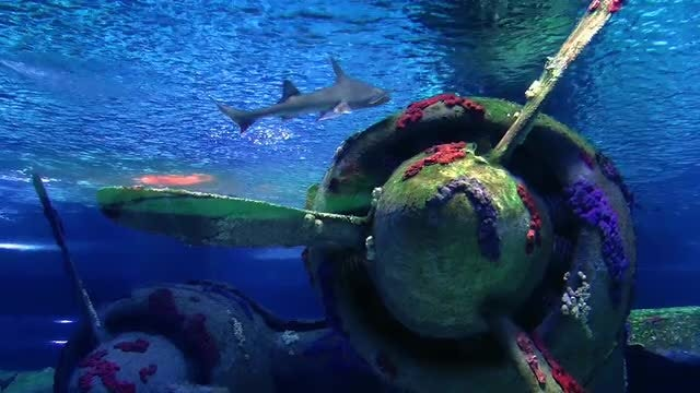 Shark Swimming In Aquarium : Stock Video