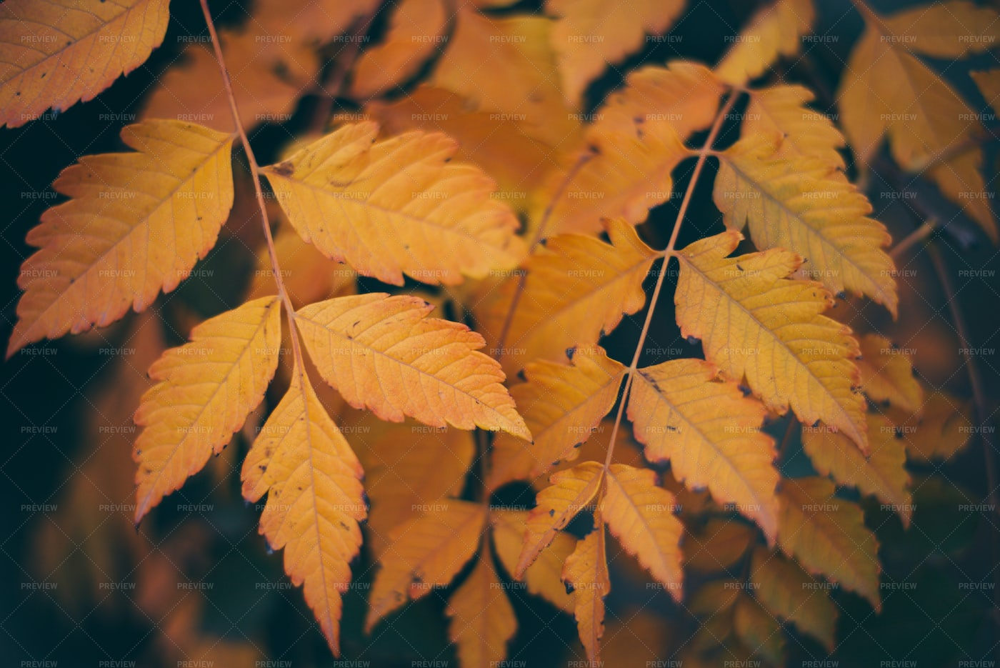 Colorful Autumn Leaves: Stock Photos