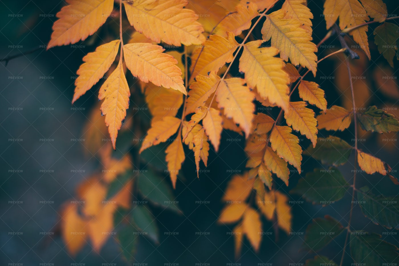 Leaves In Vintage Color: Stock Photos