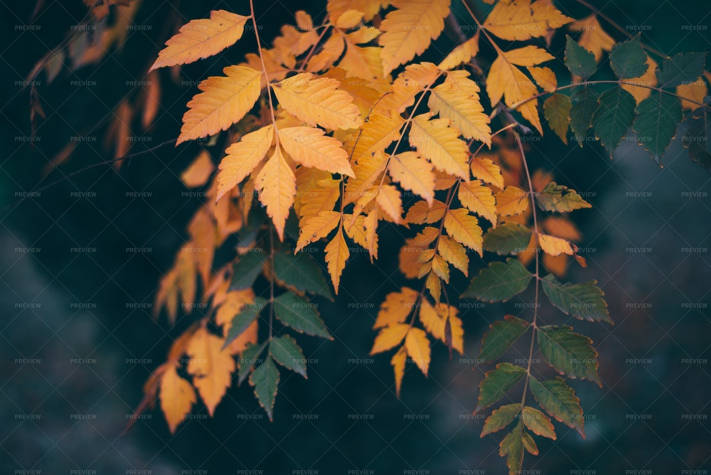 Green And Yellow Leaves: Stock Photos