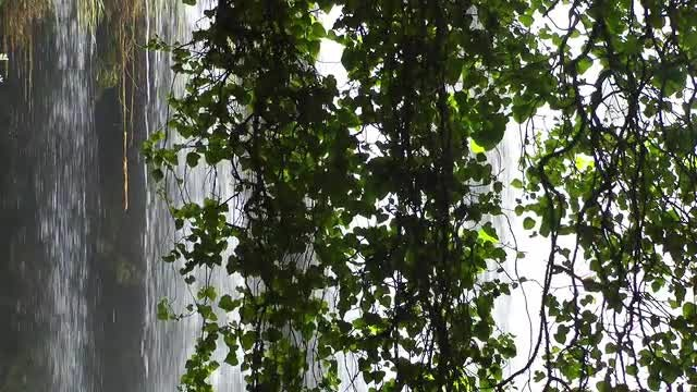 Tall Waterfall Behind Green Leaves : Stock Video