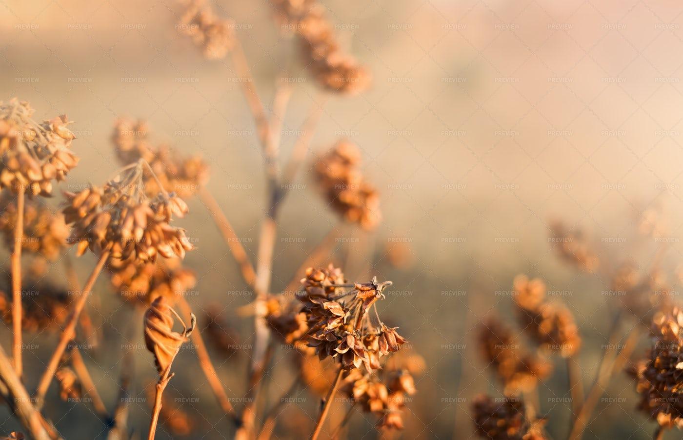 Orange Autumn Dry Grass: Stock Photos