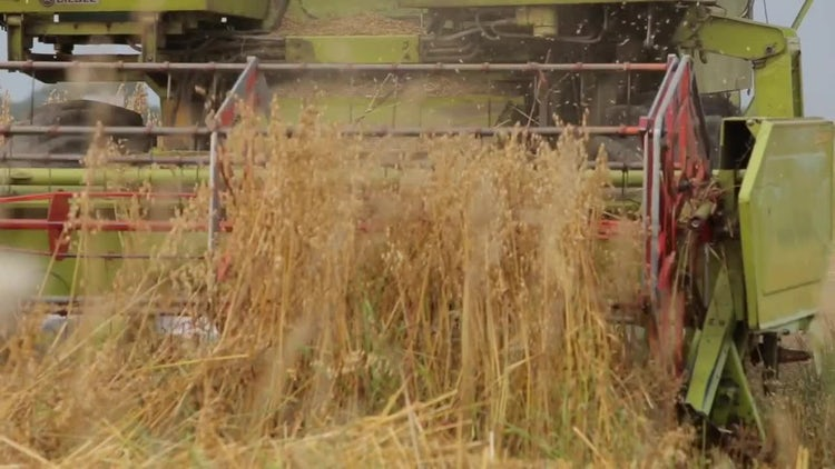 Wheat Combine Harvesting Machine : Stock Video