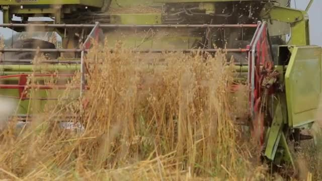 Wheat Combine Harvesting Machine : Stock Video