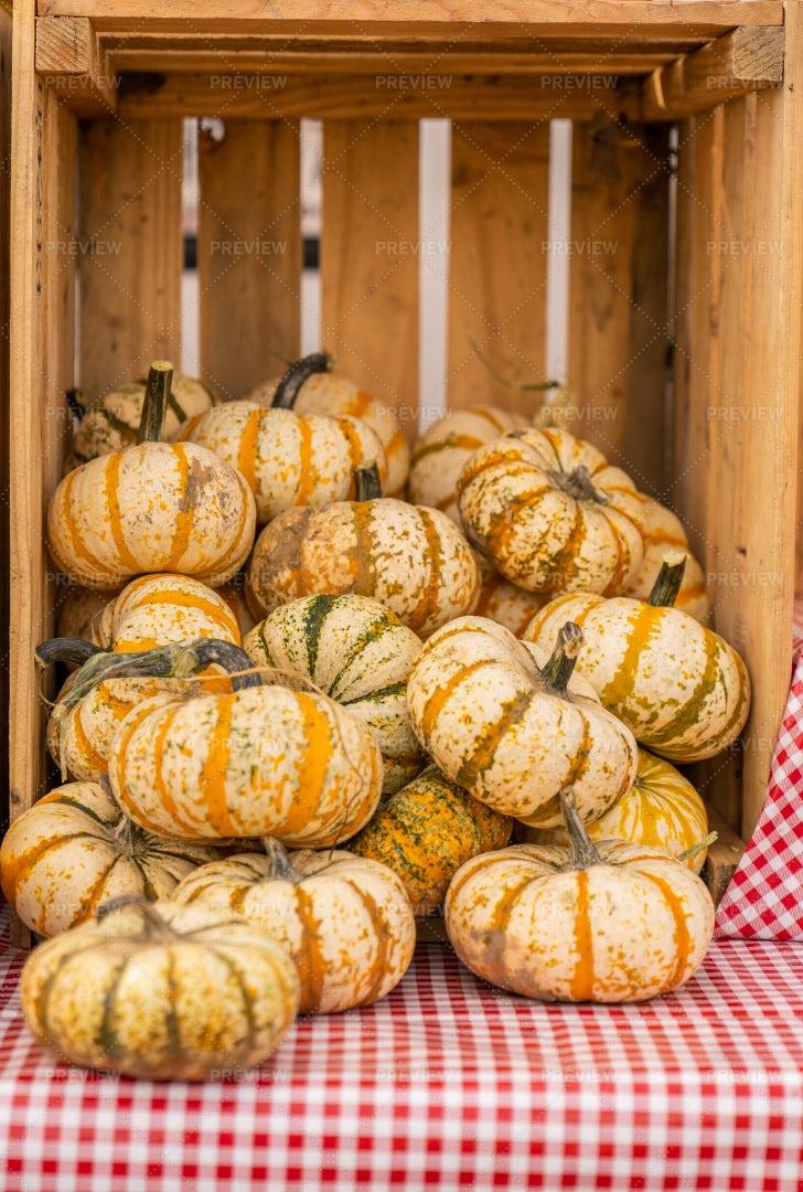 Small Baby Pumpkins: Stock Photos