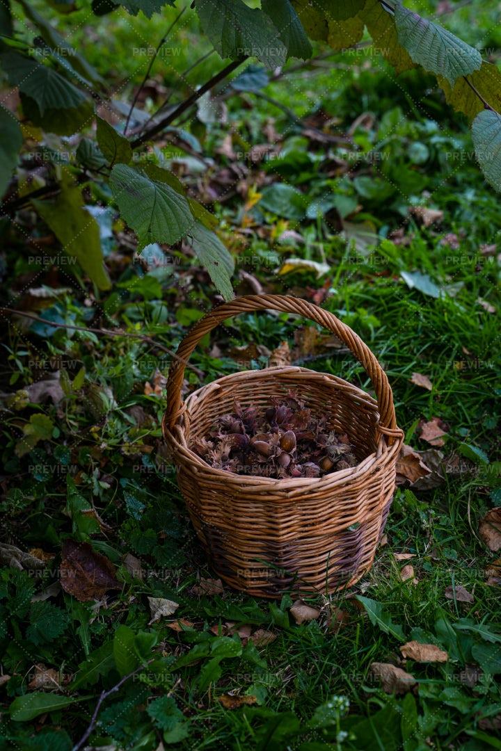 Basket With Hazelnuts: Stock Photos