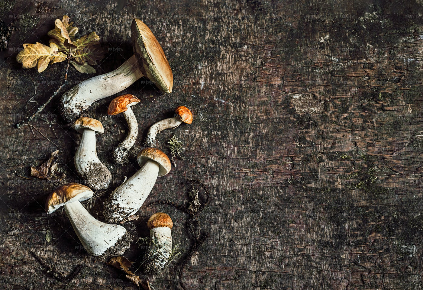 Porcini Mushrooms: Stock Photos