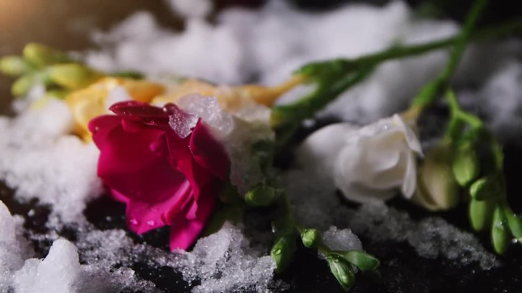 Flowers And Melting Snow: Stock Video