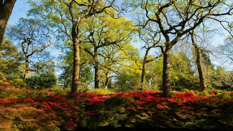 Beautiful Isabella Plantation In Richmond: Stock Video