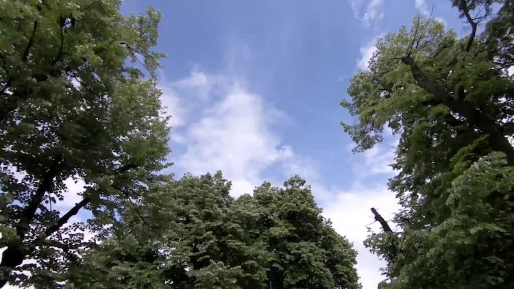 Trees Low Angle Shot: Stock Video