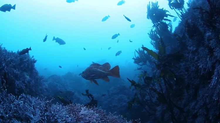 Coral Reef With Big Fish: Stock Video