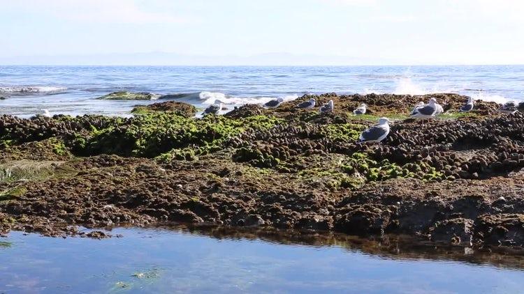 Large Ocean Waves On Island Pack: Stock Video