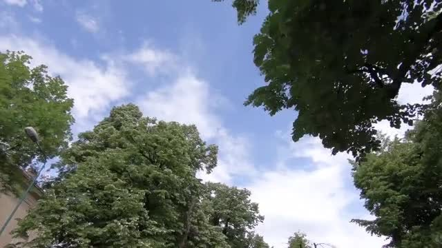Low Angle Shot Of Trees: Stock Video