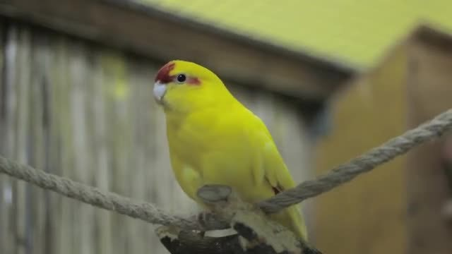 Yellow Parrot Relaxing In Zoo: Stock Video