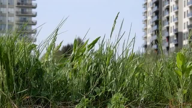 Green Grass With Apartment Buildings: Stock Video