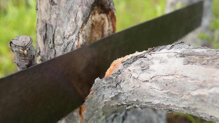 Sawing An Old Tree: Stock Video