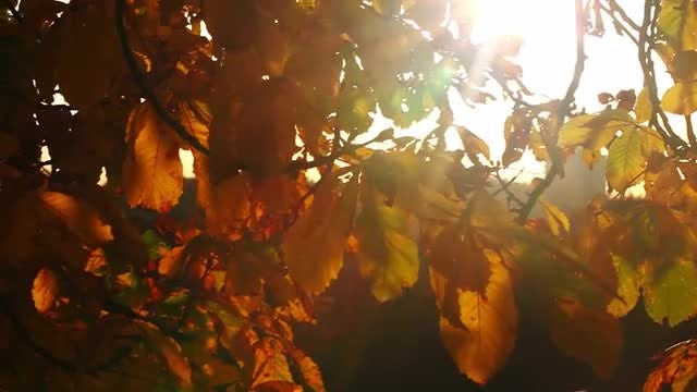 Autumn Leaves And Sunlight: Stock Video