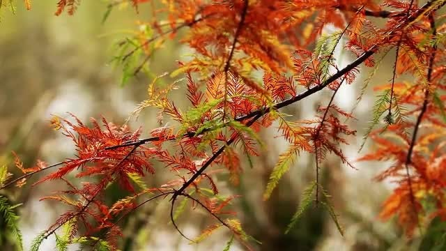 Autumn Plant Leaves Pack: Stock Video