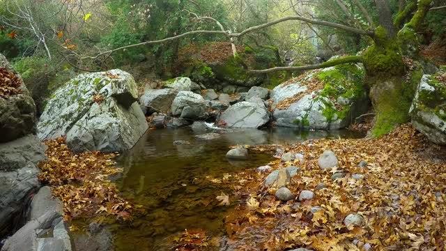 Water Stream In Autumn: Stock Video