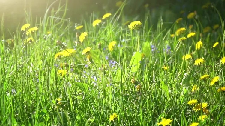 Summer Meadow: Stock Video