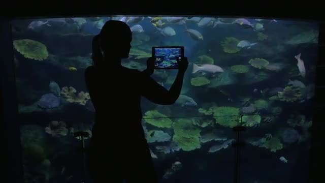 Woman Taking Pictures Of Oceanarium: Stock Video