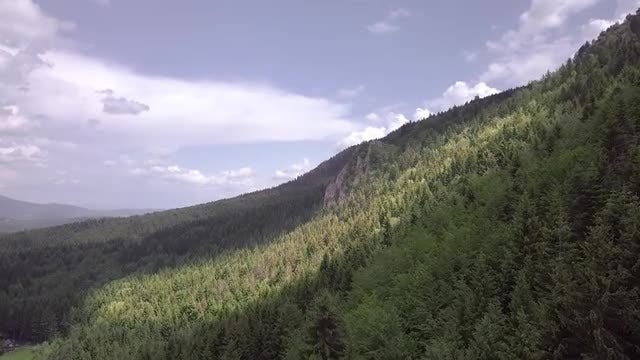 Mountain Pine Forest And Landscape: Stock Video