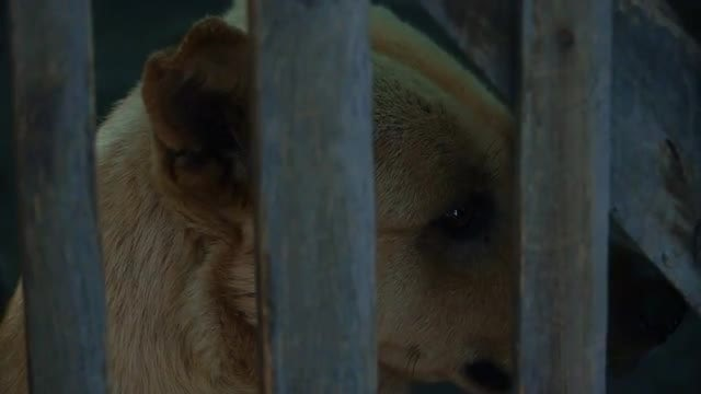 Dog In The Cage: Stock Video