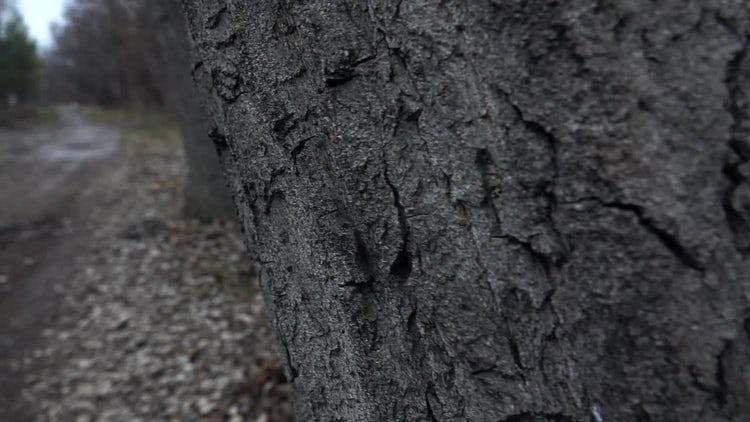 POV Of Bark Of Tree: Stock Video