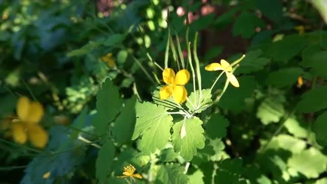 Beautiful Little Yellow Flowers: Stock Video