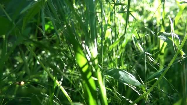 Tilting Shot Of Tall Grass : Stock Video