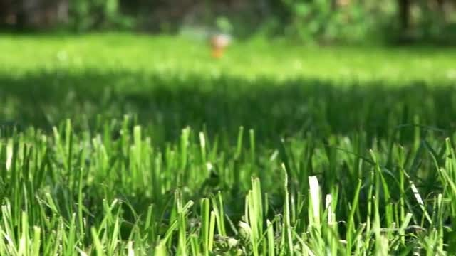 Sprinkler Watering Green Lawn: Stock Video