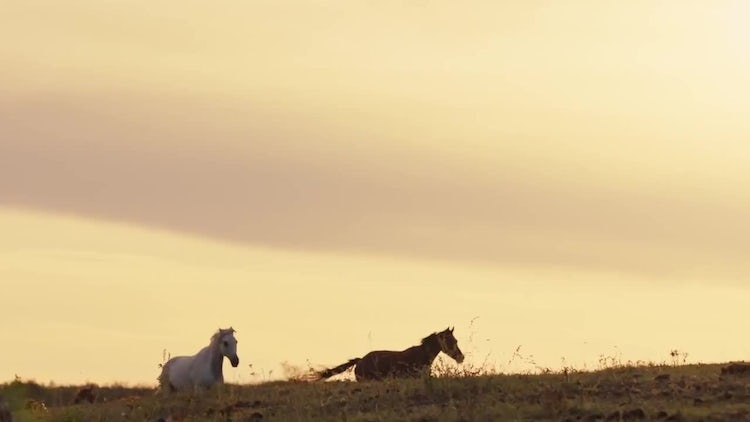 Horses Running In Slow Motion : Stock Video