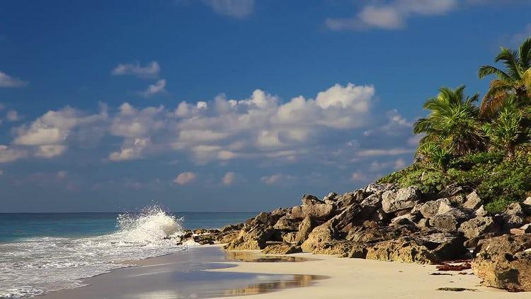 Wild Beach: Stock Video