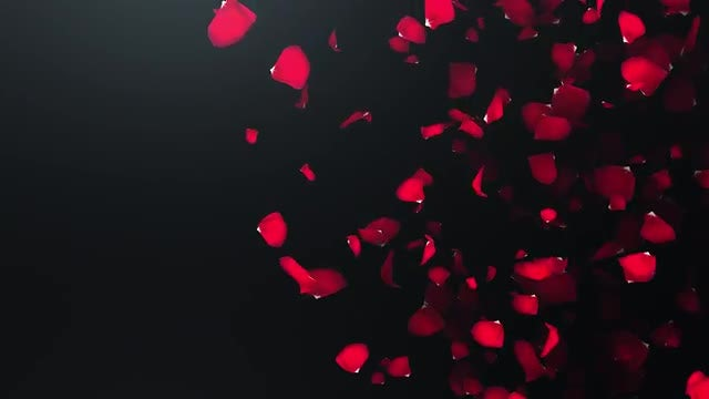 Floating Rose Petals Romantic Background: Stock Motion Graphics