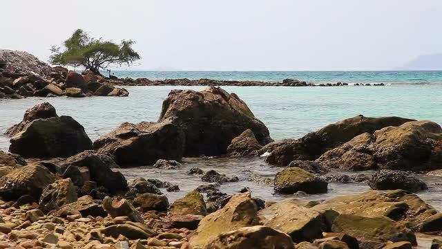 Rocky Shore: Stock Video